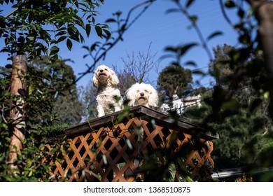 Dog+angel Images, Stock Photos & Vectors | Shutterstock