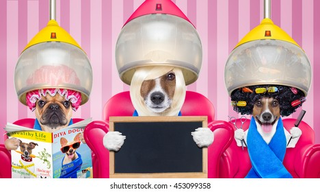 couple of dogs at the groomer or hairdresser, under  drying hood,reading newspaper sitting on red chairs, holding blank banner or placard