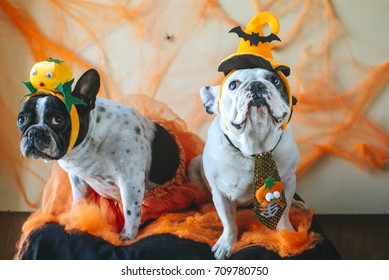 couple of dogs with halloween costume