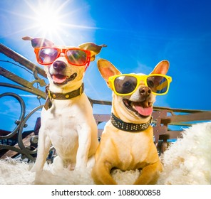 couple of dogs  with sunglasses at balcony  enjoying the sun and hot weather at summer vacation holidays