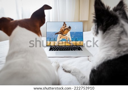 couple of dogs watching a movie  on a laptop computer in bedroom, close together