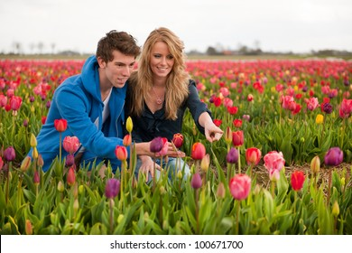 Couple Dutch tourists are plucking tulips in the flower fields