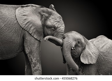 Couple of elephants in black and white colors.