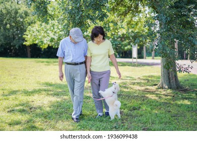 A couple of energetic seniors walking their dog