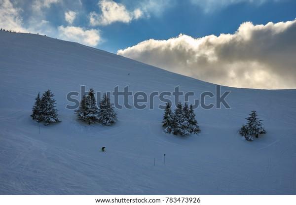 Couple of fir trees on a Lebanese ski slope