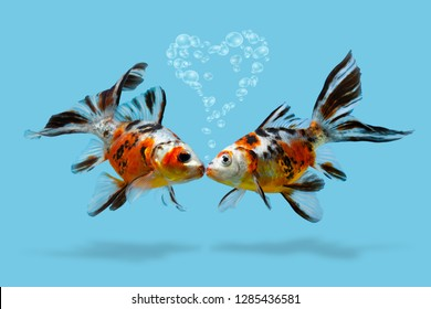 A couple of fishes with heart shaped air bubbles, kissing lovers, Love, romance, Saint Valentines day, Collage of goldfish isolated on blue background