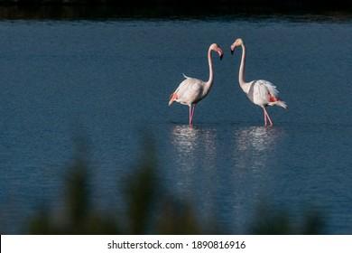 Un par de flamencos en el agua