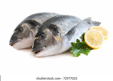 couple of fresh gilthead bream fish or dorada isolated on white