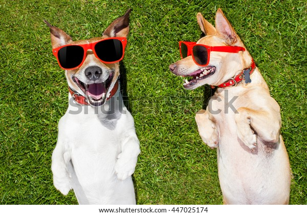 couple of  funny  and laughing dogs with sunglasses,  on grass or meadow in park    on summer vacation holidays