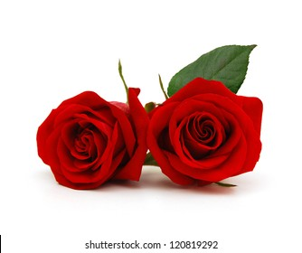 A couple gift roses on valentine day