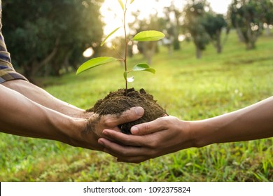 couple hands holding young tree preparing plant