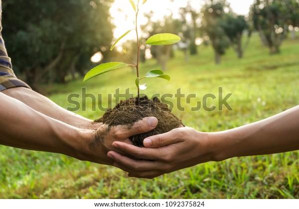 main de couple tenant un jeune arbre préparant une plante