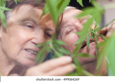 Couple of happy seniors smelling Cannabis plant.