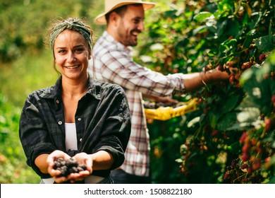 Couple harvesting brambles in garden