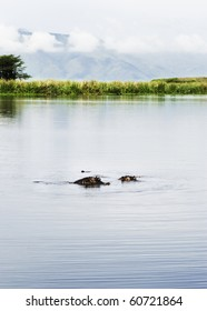 A couple of hippopotomus bathing in a deep pond, Tanzania, East Africa