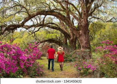 Couple holding hands walking in the garden on weekend trip. Azaleas in bloom under oak tree. Magnolia Plantation and Gardens, Charleston, South Carolina, USA