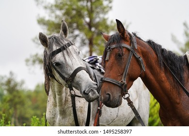 Couple of horse portrait on green field, close-up. Two horses embracing in friendship