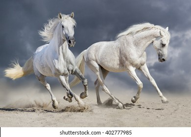 Couple of horse run against cloudy blue sky