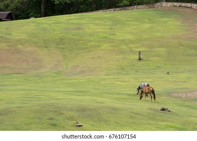 Couple horses in field