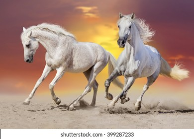 Couple of horses run gallop in sand at sunrise