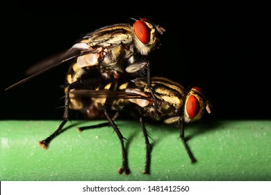 Couple of hover-fly in the dark background