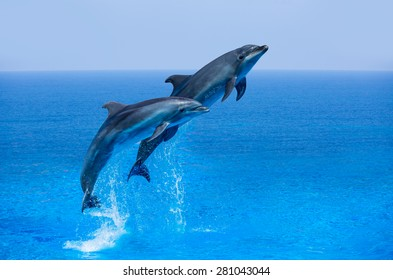 Couple jumping dolphins, blue sea and sky