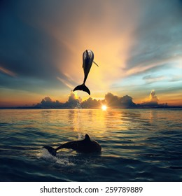 Couple jumping dolphins, morning sea and sunrise sky, creamy clouds, bright sun, shining water. Ocean life.