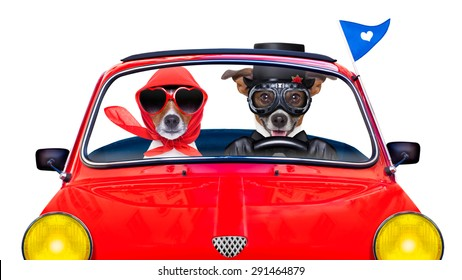 Cool Dog with Goggles in Car Old Photo