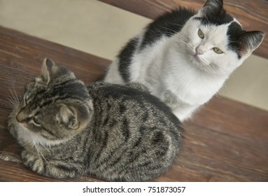 Couple of kittens, one dark and one clear, sitting on a wooden bench raised from above
