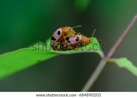 lady bug sex