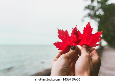 Couple in love holding with hands two red maple tree leaves. National symbol of Canada. Toronto Island Park