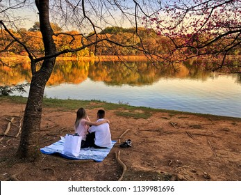 Couple in love, in a very beautiful afternoon at Ibirapuera Park, Sao Paulo, Brazil. Romantic landscape by the lake. Gorgeous nature. Pink cherry flowers. Relaxing and peaceful moment, golden hour