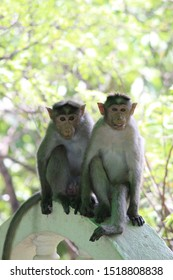 couple monkey strike a pose when camera lens is facing