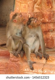 A couple of monkeys is sat on the base of a building made of red stones. These monkeys are from the macaque rhesus family.