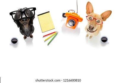 couple of office worker businessman dogs  with telephone, phone  notepad, pencil, isolated on white background