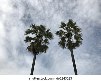 Couple Palm trees with clouds sky background