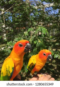 Couple of Parrot at the garden