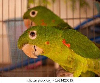 couple of parrots in a cage, one looking at me