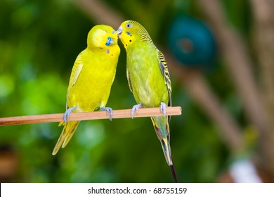 Couple of parrots on a branch on a tropical island