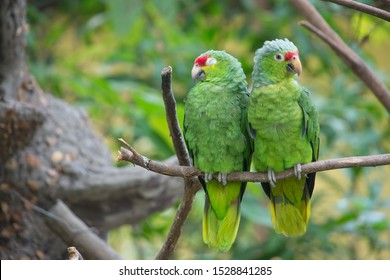 A couple of parrots, seems like discussing as man vs woman