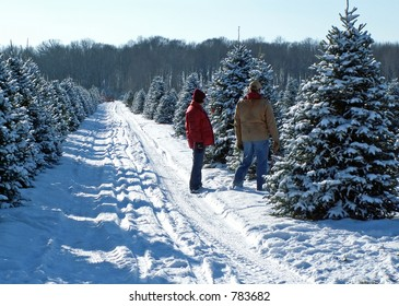 A couple picking out their Christmas tree