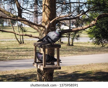 A couple of pigeons are sitting on a empty feeder for birds in the park waiting for food