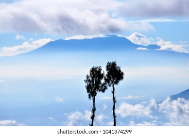 Couple Pine trees with volcano mountain background and blue sky clouds