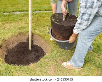 Couple planting oak tree in their backyard garden