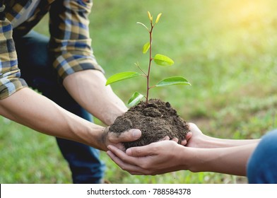 couple planting and watering a tree together on a summer day in park, volunteering, charity people and ecology Environment and ecology concept