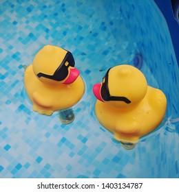 A couple of pool ducks seemingly having a conversation.