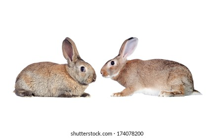 Couple of rabbits faced isolated on a white background
