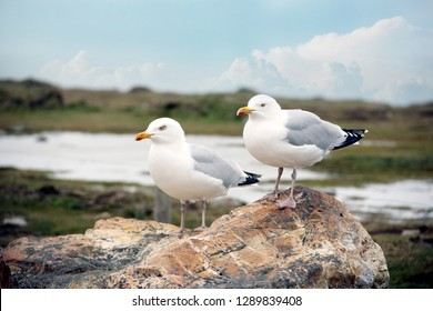 a couple of seagulls sitting on a rock in a beautiful landscape