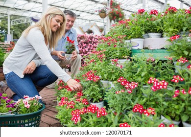 Couple searching plants for plants in garden center and smiling