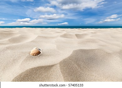 A couple of shell nuts on a tropical sandy beach. Dramatic blue cloudy sky.
